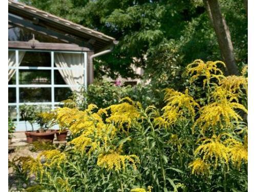 Un giardino curato