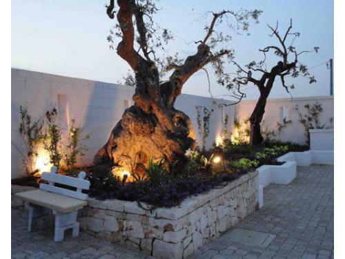 Gli ulivi secolari all`interno del giardino