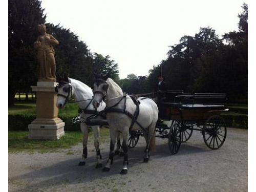 Carrozza due cavalli