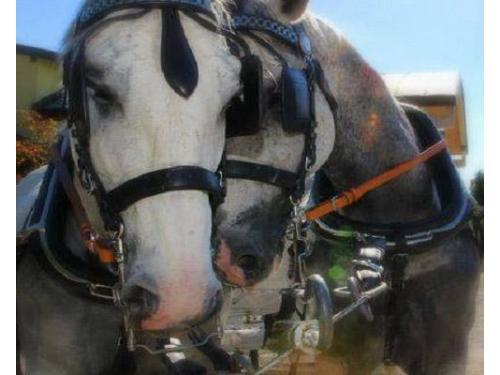 Atmosfera romantica anche per i cavalli